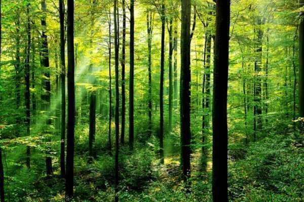 Guide to Finding Environmental Lawyer