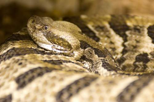 New Study Raises Concern over Illegal Python Skins