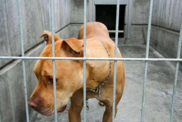 Animal Welfare Act Text