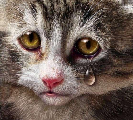 Animals Poisoned by World War II Toxins