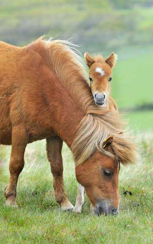 Recent Animal Welfare Act and Horse Protection Act Violations